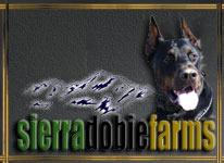 Doberman Breeders Sierra Dobie Farms